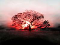 red tree wallpaper hd