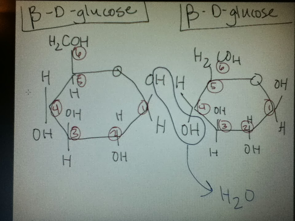 Bio Geo Nerd H2coh