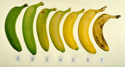 Kebaikan makan pisang untuk kuatkan sistem imun drp Premium Beautiful hasbi dan adibah