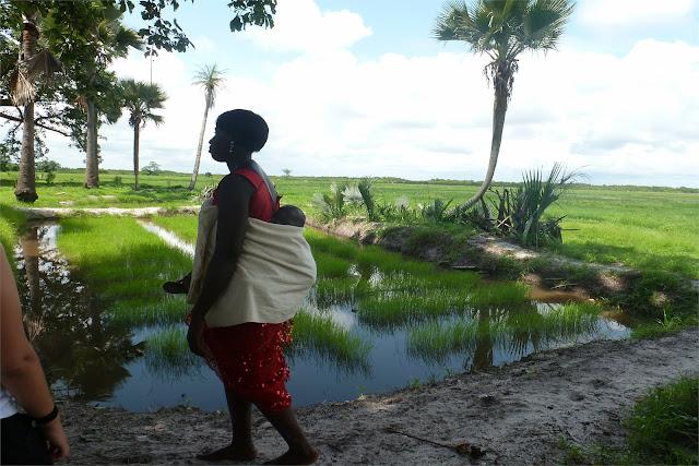 Recorriendo los campos de arroz