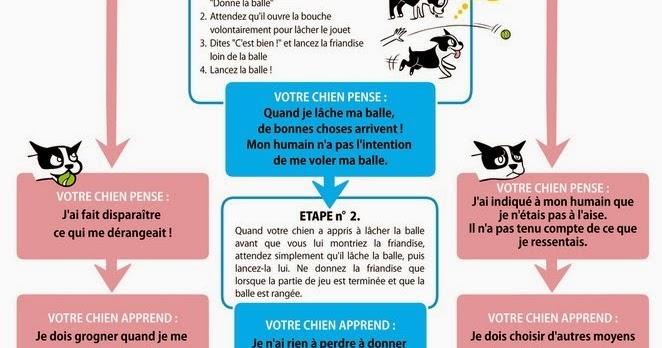 3 choix pour éduquer son chien-Le Bouledogue Français