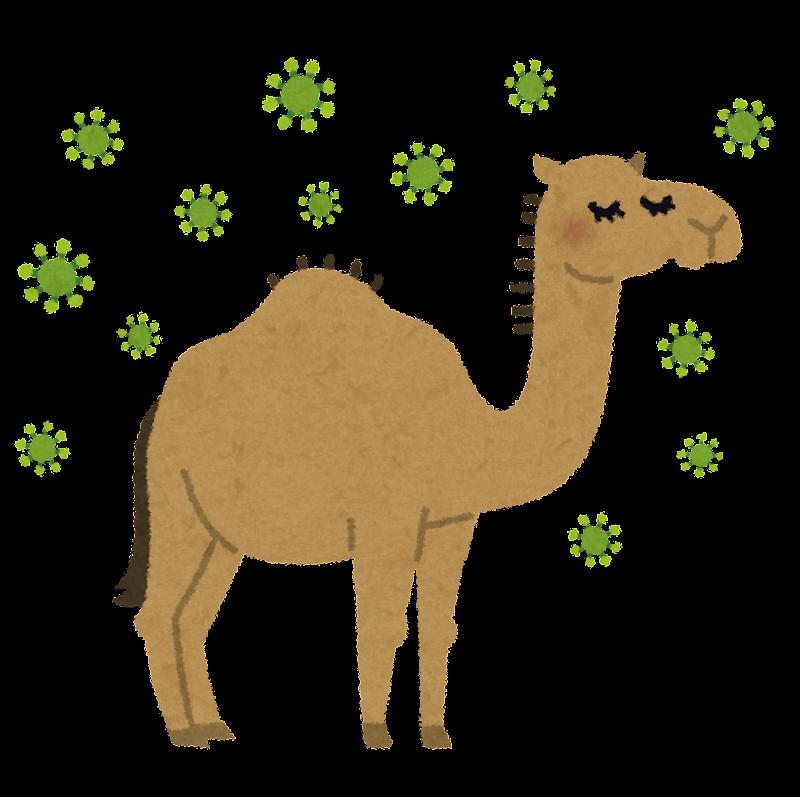 ラクダの画像 p1_16