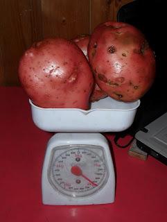 vkusniogorod – картофель