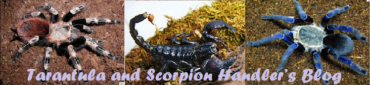Tarantula and Scorpion Handler's Blog