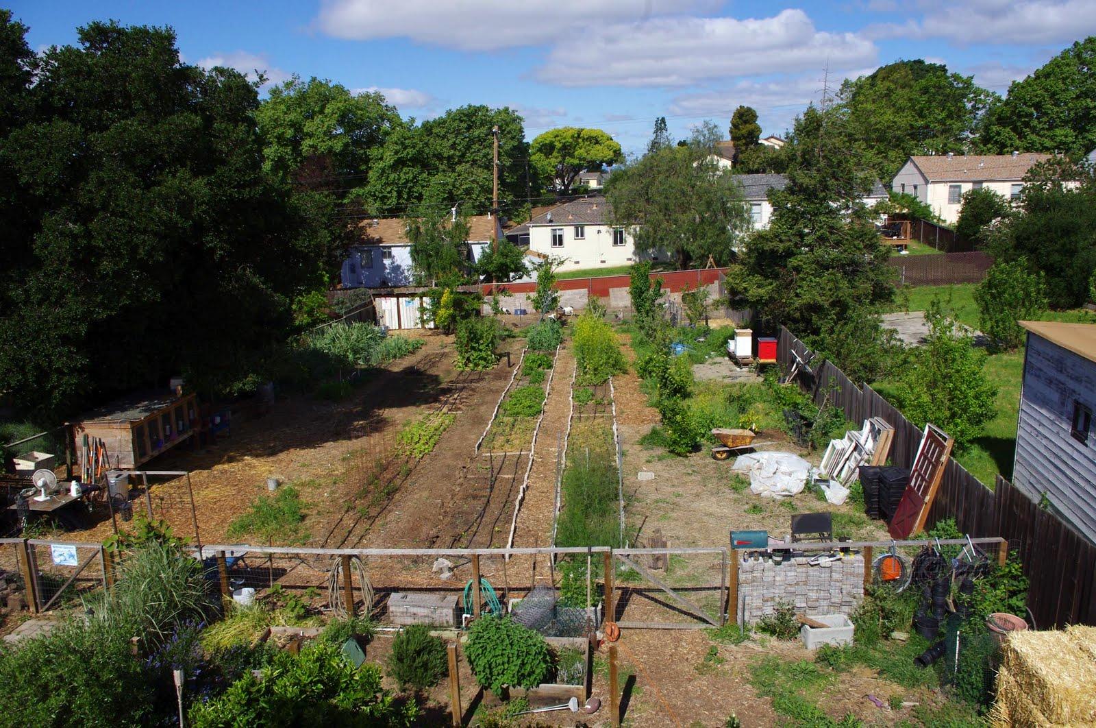 backyard farming animals various design