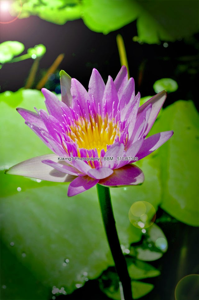 Photo Flower Klikmg3    Fotografer : Klikmg3 Photography ( Fotografer Purwokerto )    Android Apps Klikmg3 Photography :: goo.gl/PBpg3j