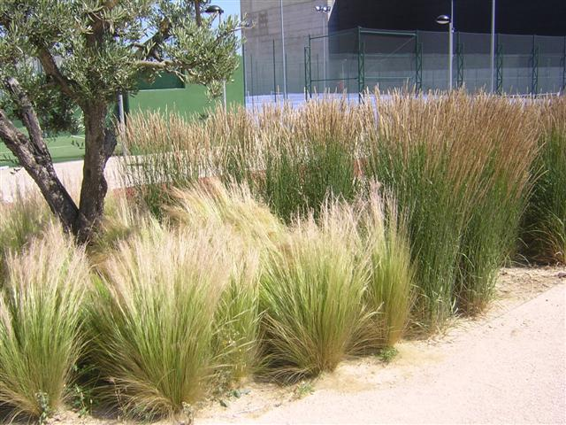 plantas e jardins ornamentais: Jardins: plantas, flores e jardinagem : As gramíneas ornamentais