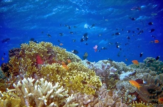 diving in wakatobi, snorkeling in Wakatobi, underwater world, underwater photography, honeymoon in Wakatobi, wakatobi resorts, holiday in wakatobi