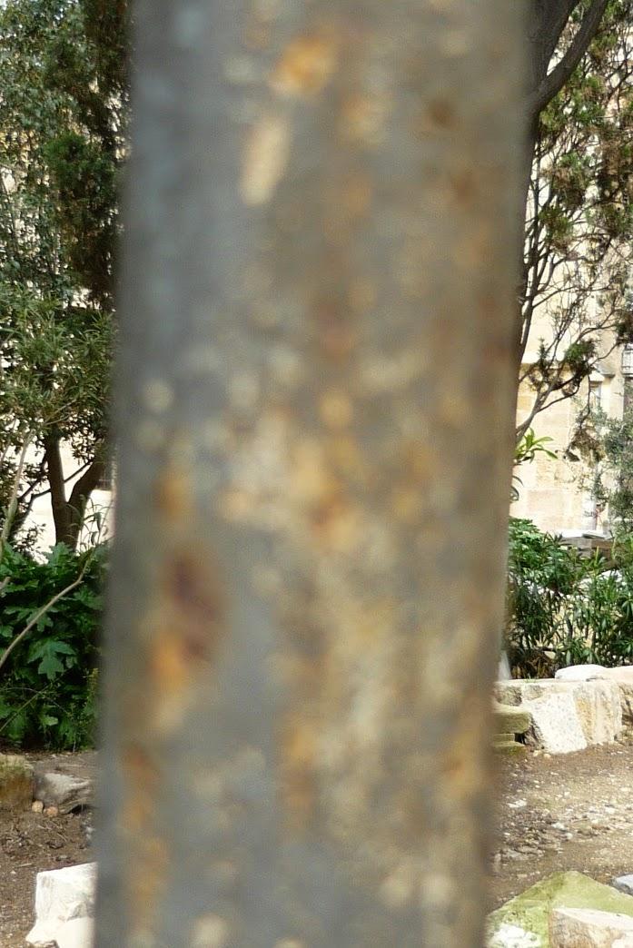 tronco dorado, Beatriz 2010