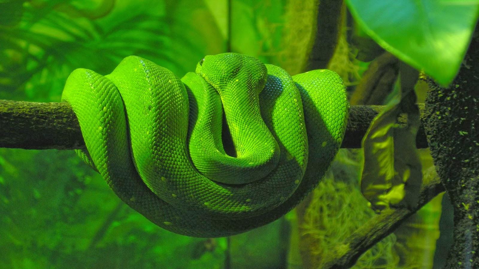 film ular putih dan ular hijau gambar abstrak hitam putih
