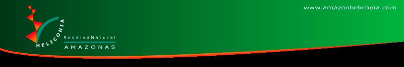 Heliconia amazonas