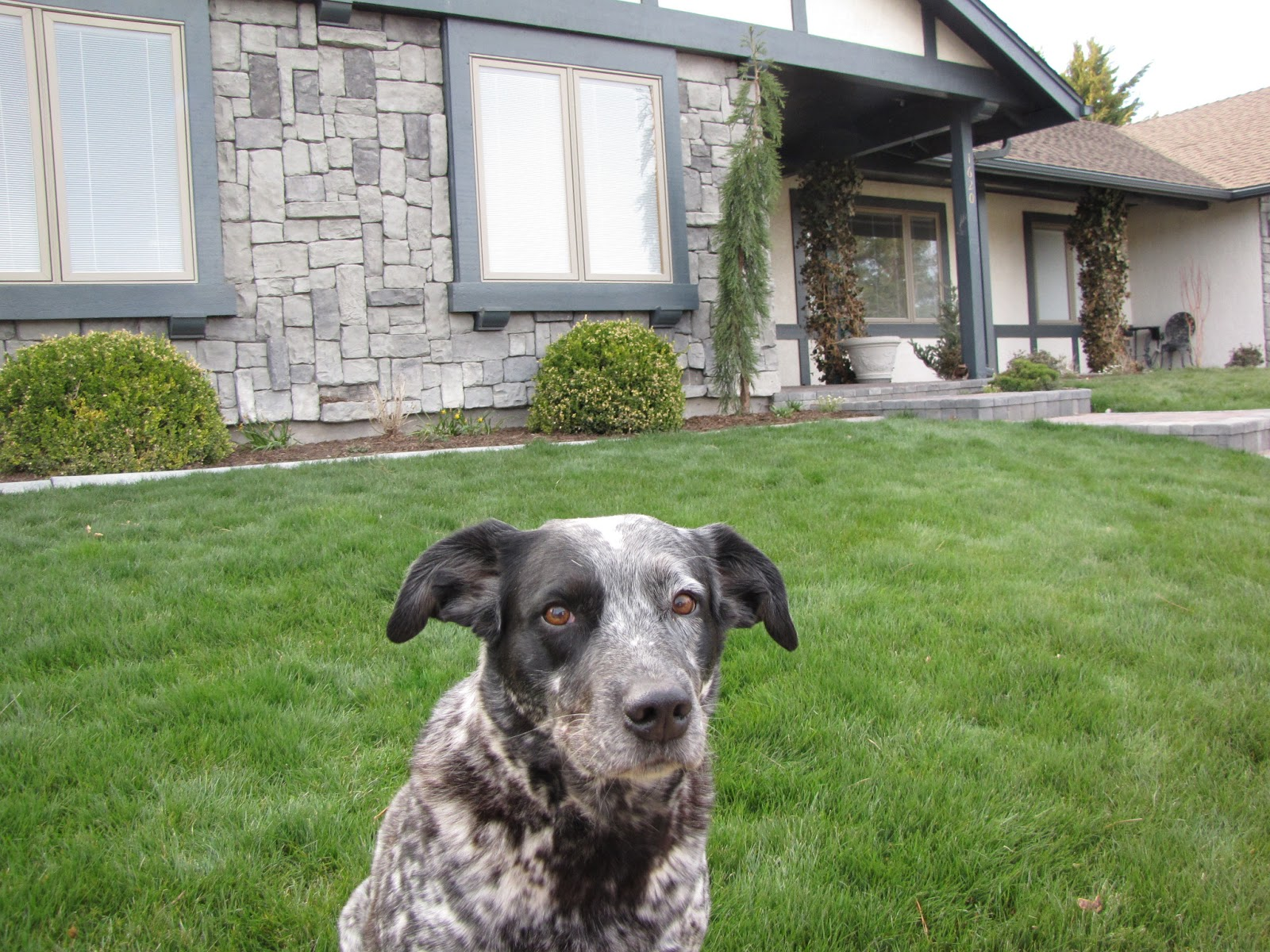 the art of landscaping dog friendly landscaping
