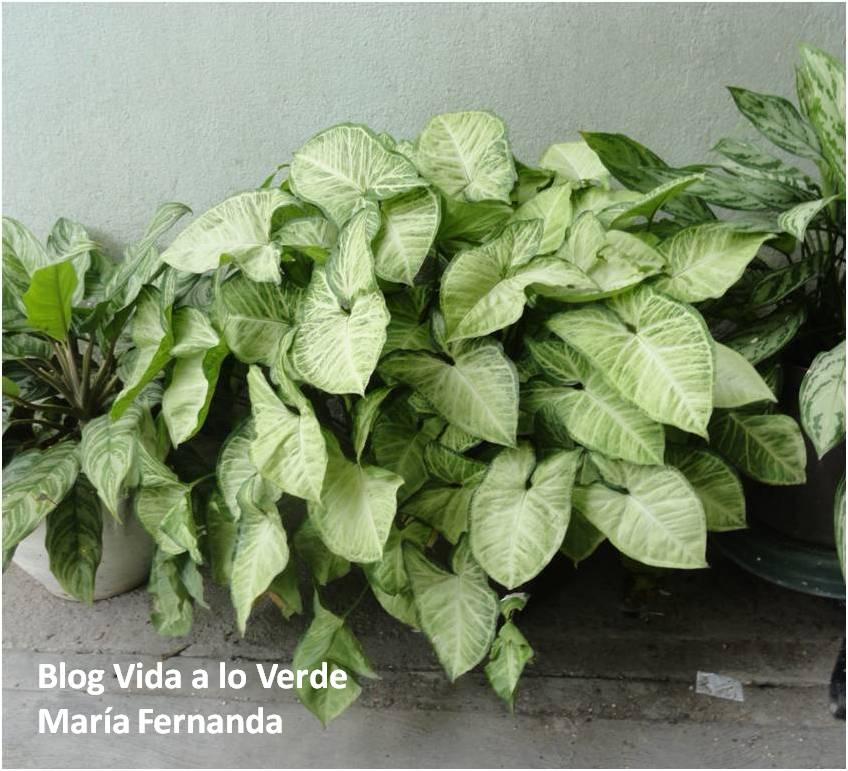 Vida a lo verde living in green qu plantas usar para - Plantas de exterior de sombra ...