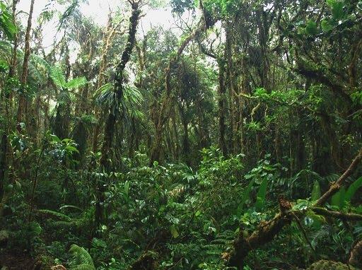 Dan definisi dari hutan tropis adalah hutan alam yang terletak di