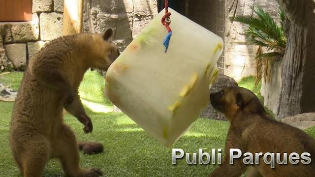 Animales alimentándose de helados