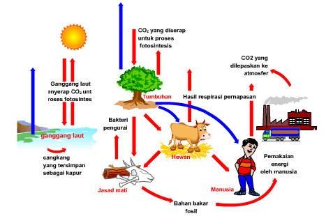 Peran Komponen Ekosistem dalam Daur Biogeokimia