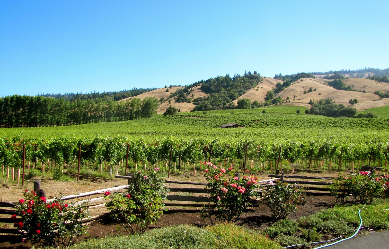 Mendocino County Wine & Winegrapes - - Navarro Vineyards