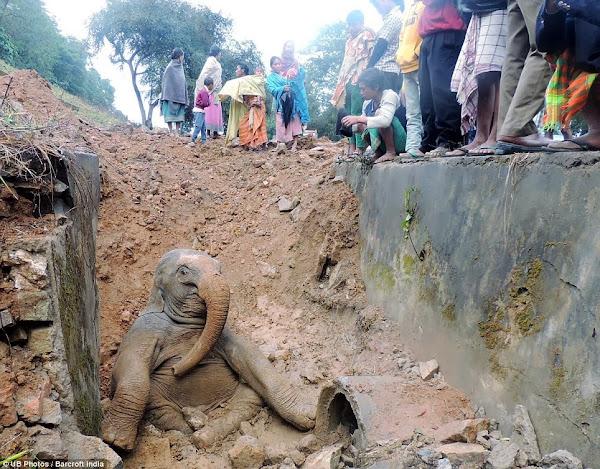 Trenes y elefantes. Continua disputa de la India