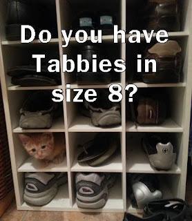 if the cat fits, meme it