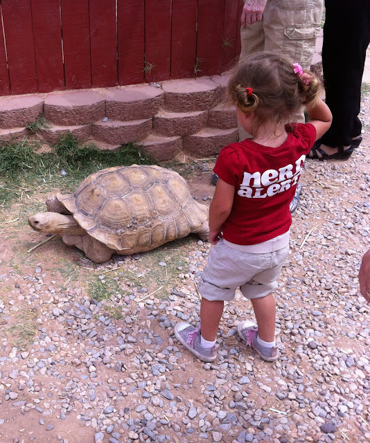 little girl tortoise