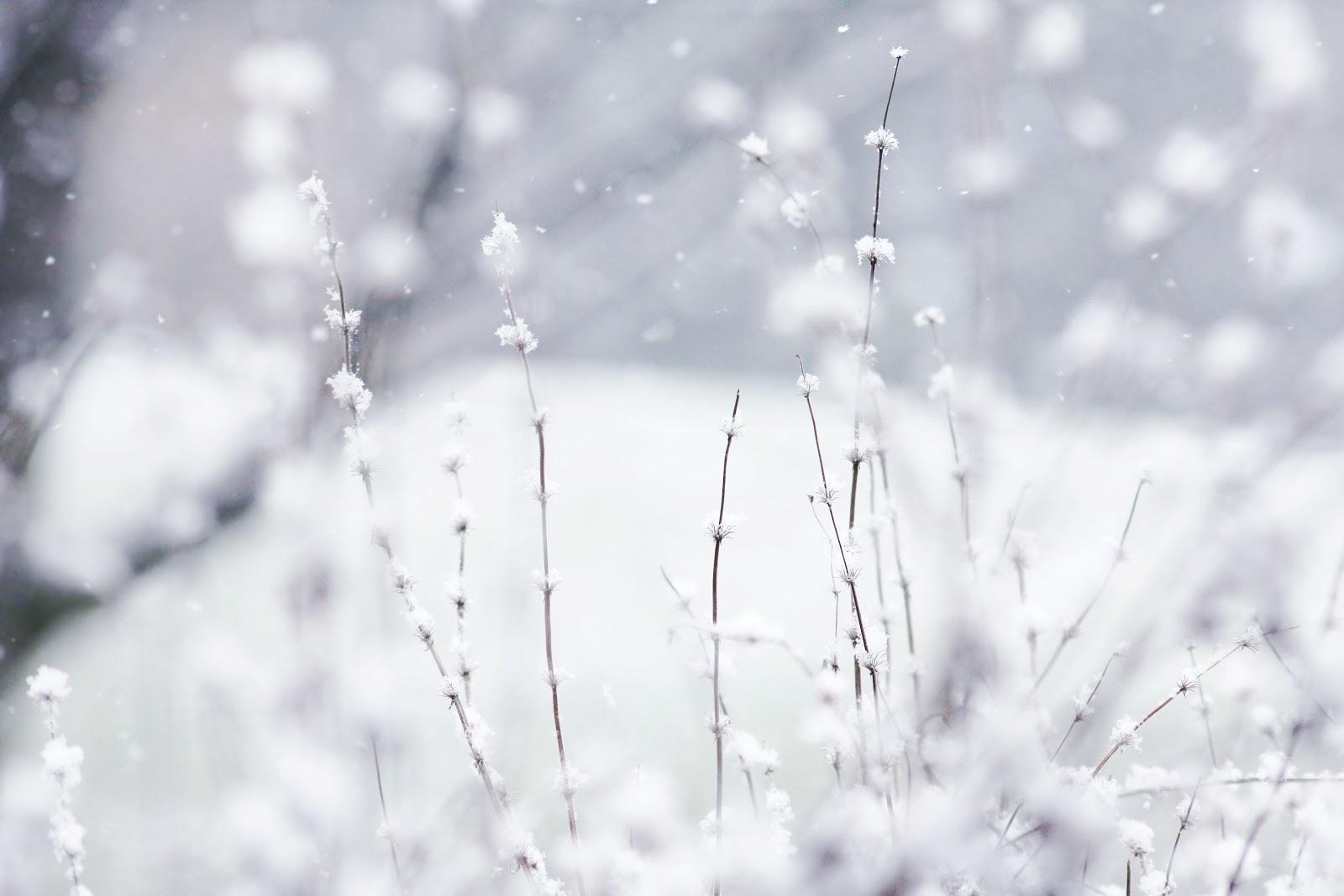 Ayurvedica vida invierno for Imagenes de patios de invierno