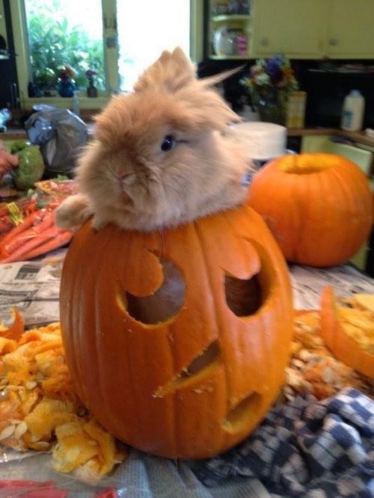 Funny halloween animals2-8