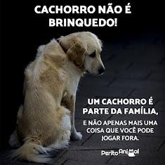 NÃO ABANDONE!!!