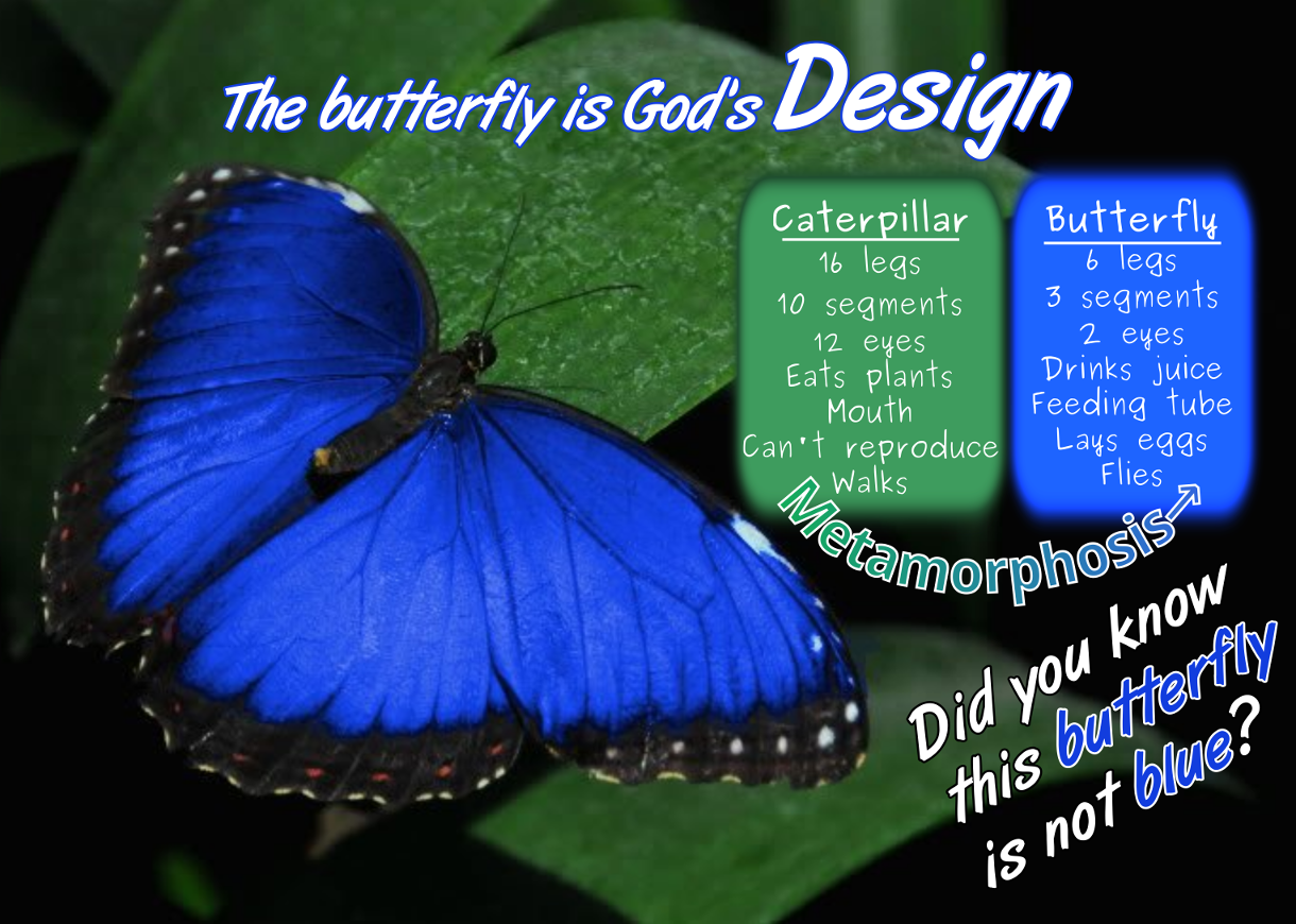 Butterfly-Design page