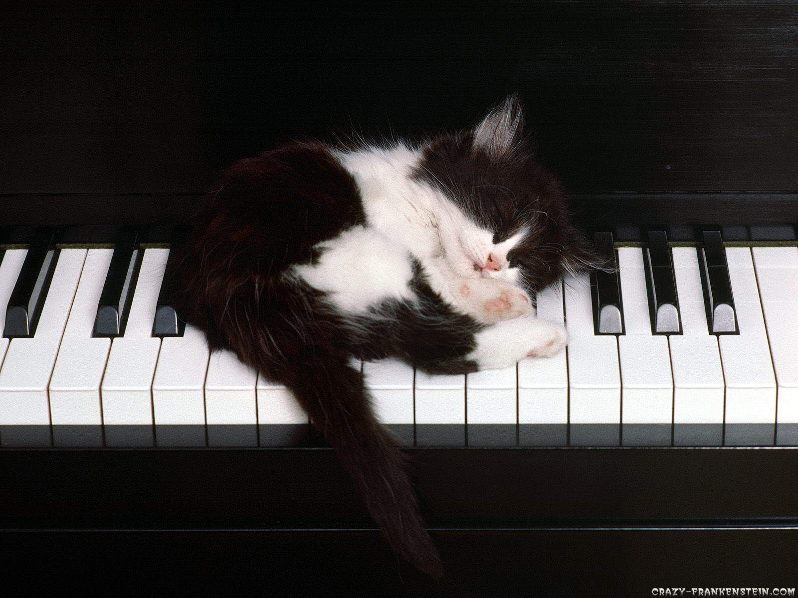 http://2.bp.blogspot.com/-aQPymjwGNHs/UGgdNA-JsWI/AAAAAAAAAfo/gQ5LBlNg-OU/s1600/black-white-cat-and-piano-wallpaper-.jpg