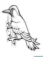 Gambar Burung Pelatuk Untuk Diwarnai