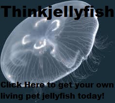 Our Jellyfish Company