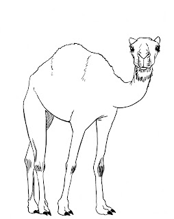 draw camel ink
