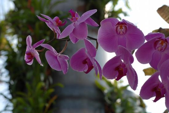 Jardim trololo rosa e violeta entre as orqu deas for Villa bonita violeta
