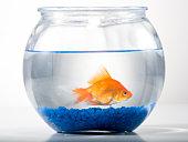 Anuncie Grátis sua Loja de Pesca e Aquarismo