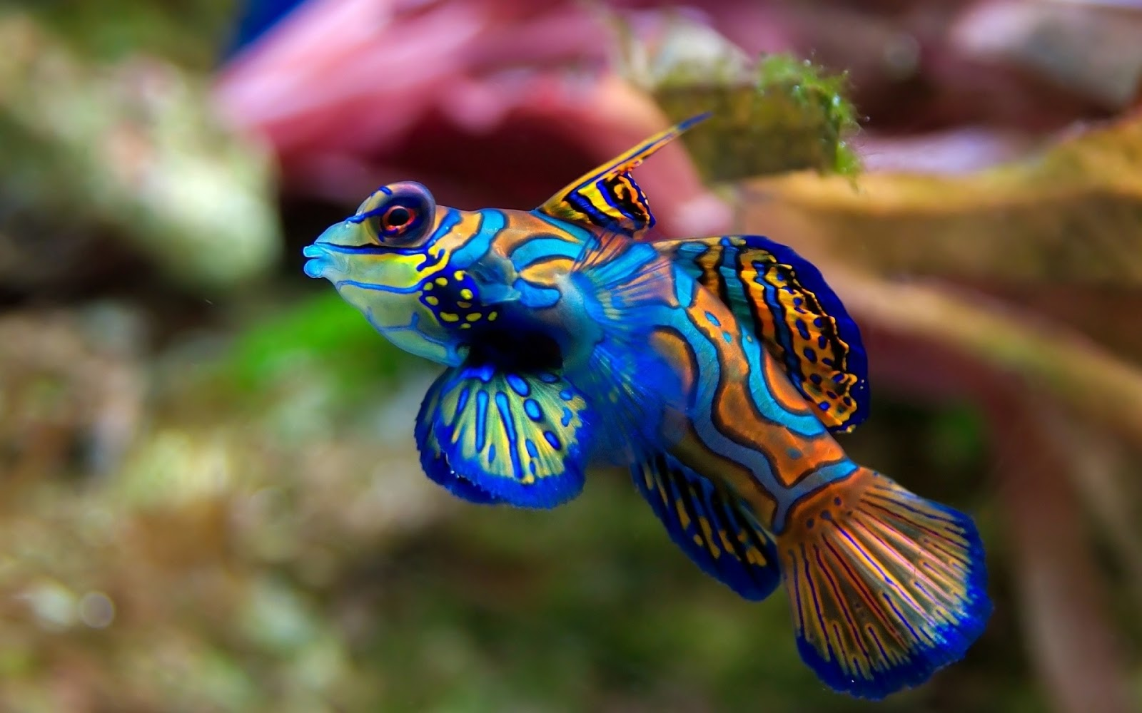 http://2.bp.blogspot.com/-aRClrUOGMnc/UTTRv5ReaTI/AAAAAAAADpM/0GvjPyy_DEc/s1600/Exotic+Fish+Wallpaper+HD+1.jpg