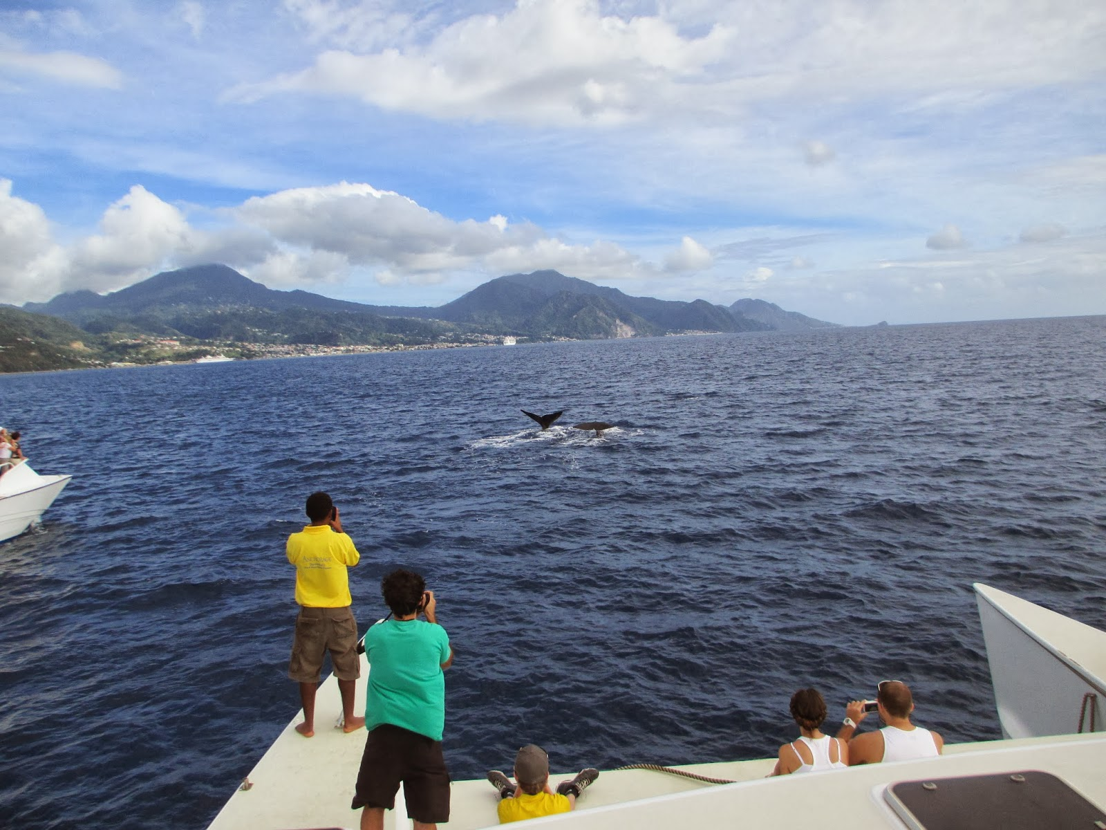 Whale watching in \Dominica