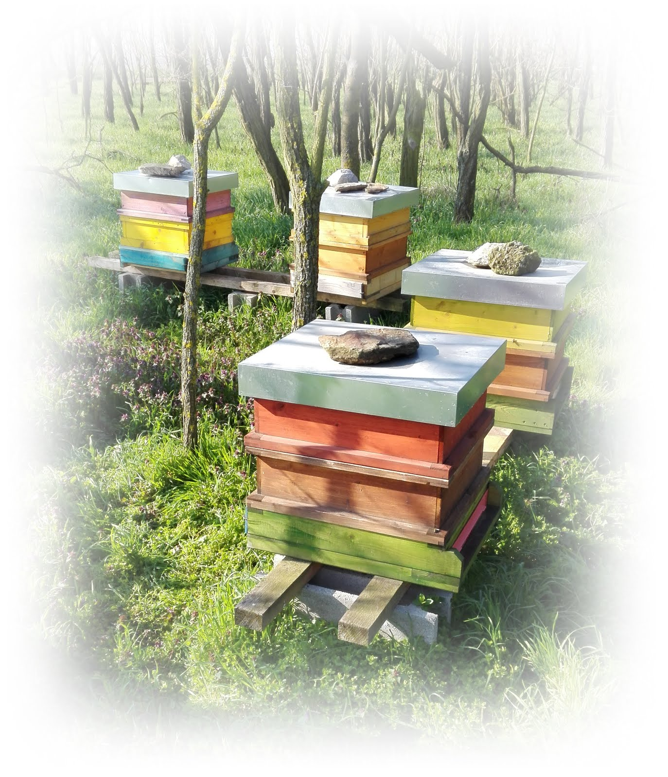 Sabine`s Welt der Bienen