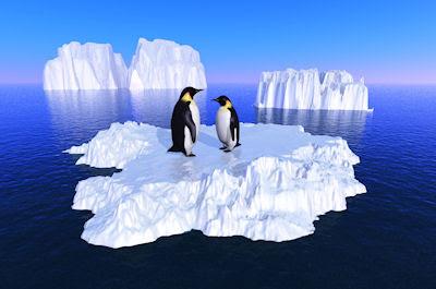Pinguinos en los glaciares - Fotos del Polo Norte - Animales en el mar