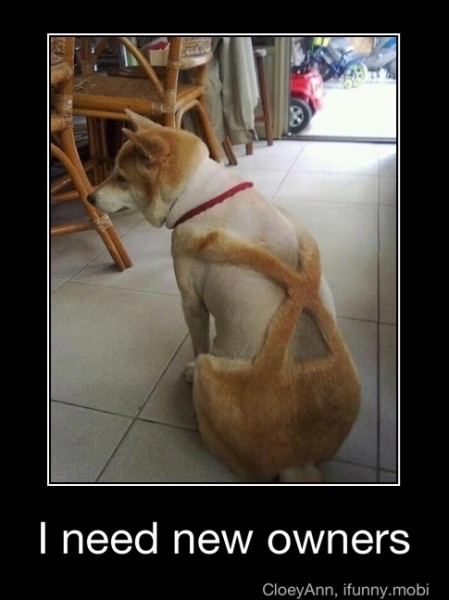 Funny Friday Pictures | funny Funny