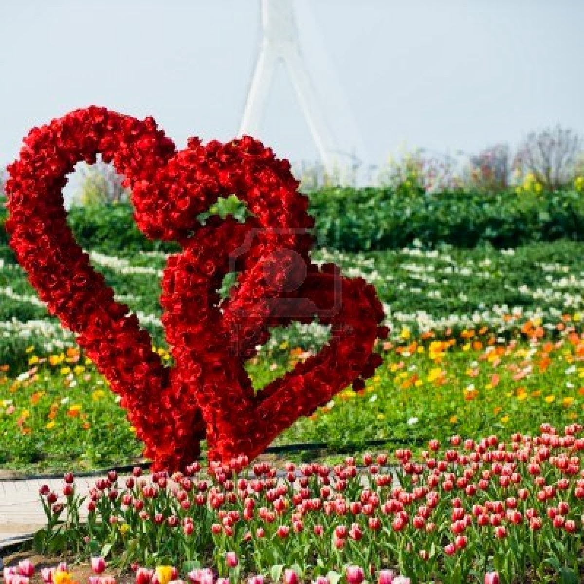 Vidas silenciosas gladys solo t for Cancion jardin de rosas