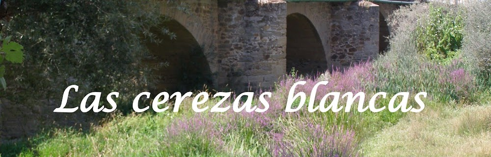 Las cerezas blancas