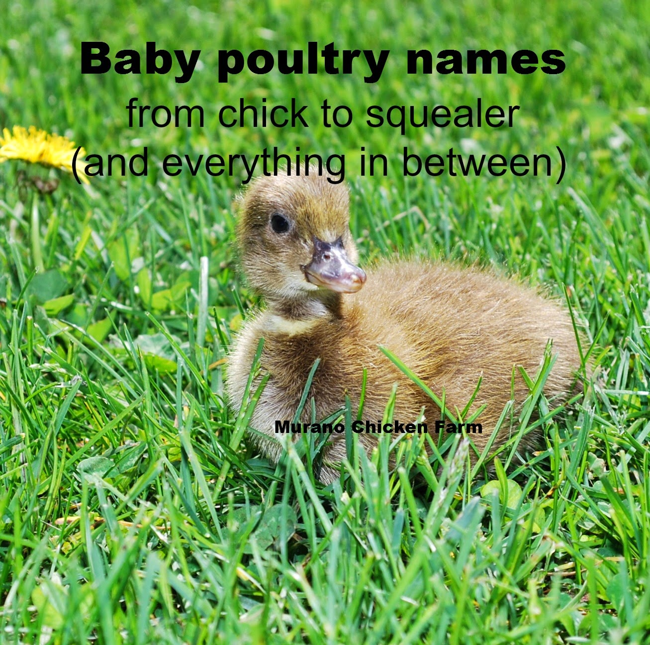 baby animal names, birds