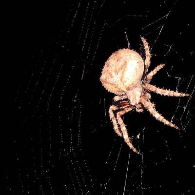 foto laba-laba