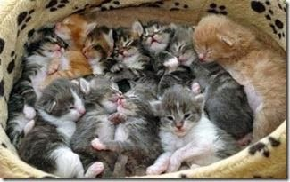 Blog 75 Billets Chatons A Donner