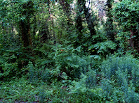 Vegetació al Torrent de Rocafarigola