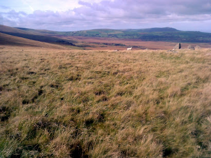Preseli Hills and sheep