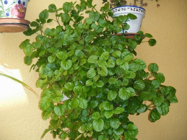Zen group estudio plantas beneficas para el hogar - Plantas para jardin zen ...