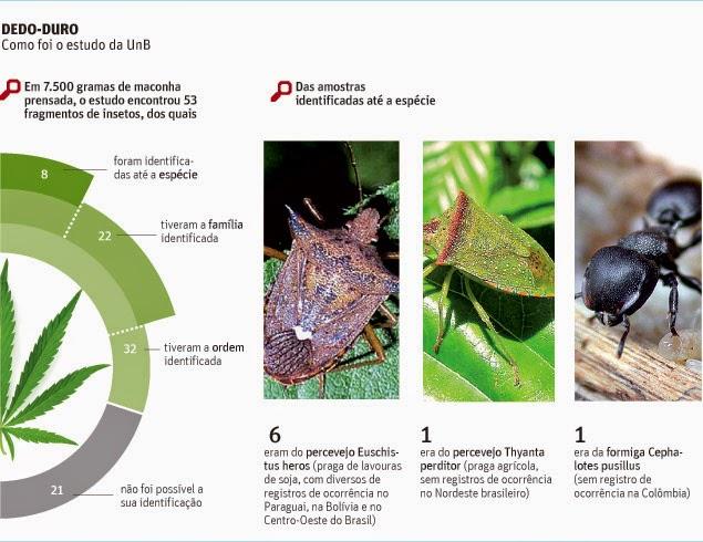 Percevejos e formigas indicam origem de drogas que entram no país