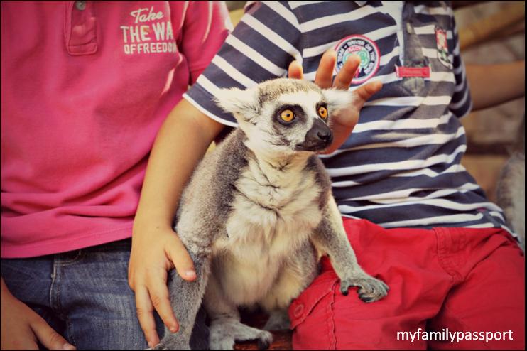 encuentro con lemures