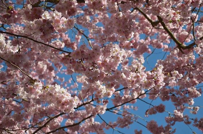 Цветущее дерево, Граф Ольга